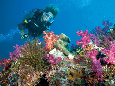 Great Barrier Reef Tour - Queensland